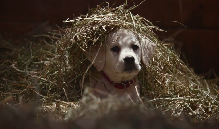 budweiser super bowl puppy